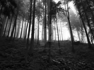 Forest No.2 by S-tiba