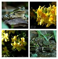 Frogs and Flowers by Faylinn