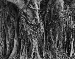 Roots of Time by Arty-eyes