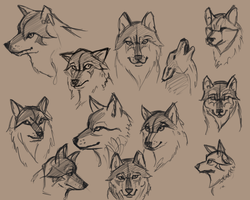 Sloppy Wolf Faces by Pseudolonewolf
