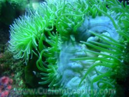 Green anemones by The-Cute-Storm