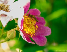 Flower and Bee by MonkeyBrainedImagery