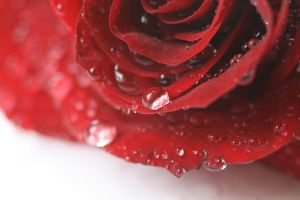 red by Gothic-Dreamscapes
