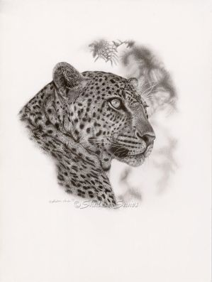 Leopard Study - Graphite Drawing by ShaleseSands