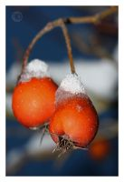 snow berry by sp333d1