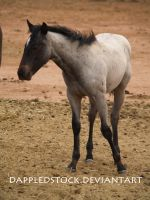 Foal 03 by dappledstock