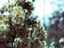 the bee by seasfairytale