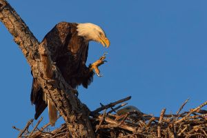 Eagles Claw by JestePhotography