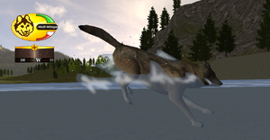WOLFQUEST - jumping in water by Jenny2-point-0