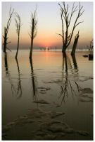 Drowned Trees Sunset 03 by michref