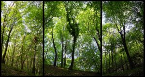 Forest of Hangony by Tatsu87