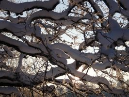 Snowy oak branches by Irkaaa