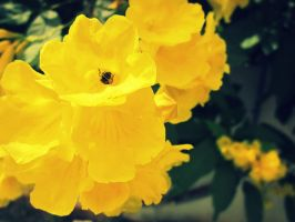 its a bee....yellow in yellow by lordbunty