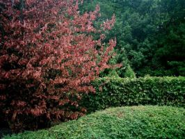 Red and Green by WendyW