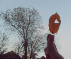 Love Autumn by 97lessi