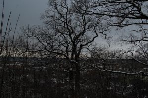 Leafless trees in winter by OOOri