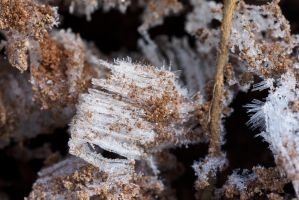 Ice Crystals by duncan-blues
