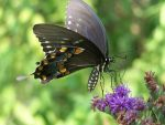 Butterfly by KyleBoswell