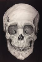 Charcoal Human Skull by Pained-Memory