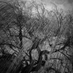 Ghost Willow by tholang