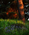 Spring Bluebells by younghappy