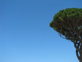 albero wall by theconcept