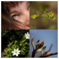 Spring by mnoo