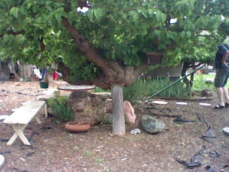 Leaning Mulberry Tree 2 by Phaedrolous