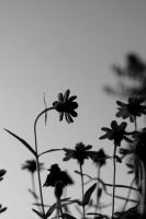 The Different Daisy by Mylares
