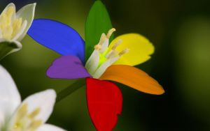 Flower of the Rainbow by iverie