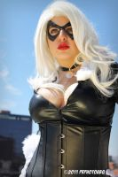 Black Cat by evilm13