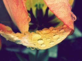 waterdrops in spring. by 333Miami333