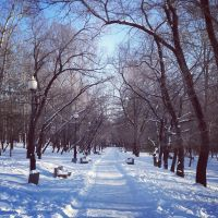 Snowy trail in Central Park by NinulyaKVN