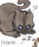 house ... cat by here-but-not