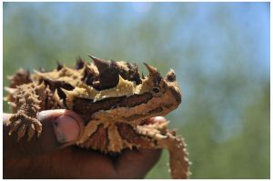 thorny devil by pathworking
