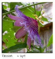 Passion by kpt