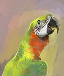 Macaw by Drkav
