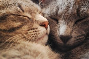 Les Chattes by Jarzee