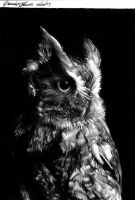 Owl. by MsRainmaker