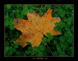 falling in luck by ad-shor