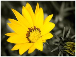 ...yellow... by MartenD