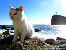 cat, was greeted at the beach by Mari-Ghostly