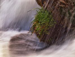 Waterfall Plants by MartinGollery
