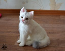 ETSY Commission White Cat by MalinaToys