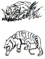 tiger sketches of yore by 000nevermore000