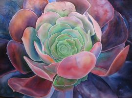 Succulent 2 by karincharlotte