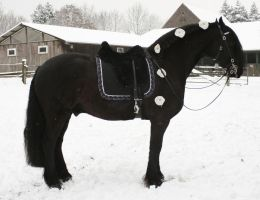 friesian janosch winter wedding horse by Nexu4