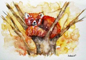 RED PANDA daily watercolor 11/25 by Saitonart