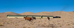 Wild  Horses and Steam Train 5 by MartinGollery