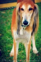 One of the Most Beautiful Dogs by PhotographicCrypto